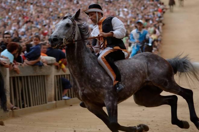 cavallo gara Palio di Siena
