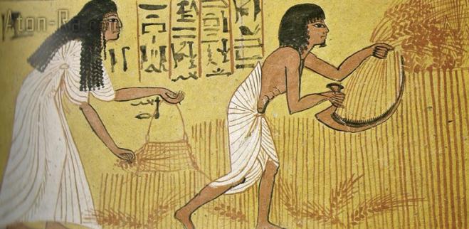 raccolta del grano Antico Egitto