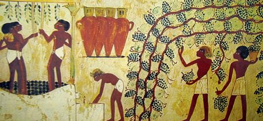 Coltivazione della vite, produzione vino Antico Egitto