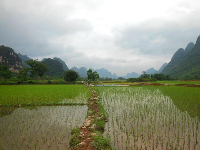 risaia Cina